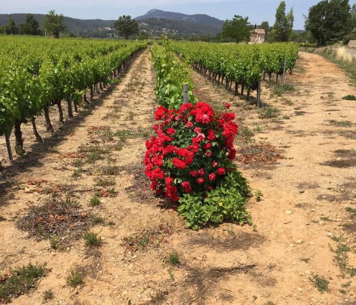 Wijn uit de Côte de Provence